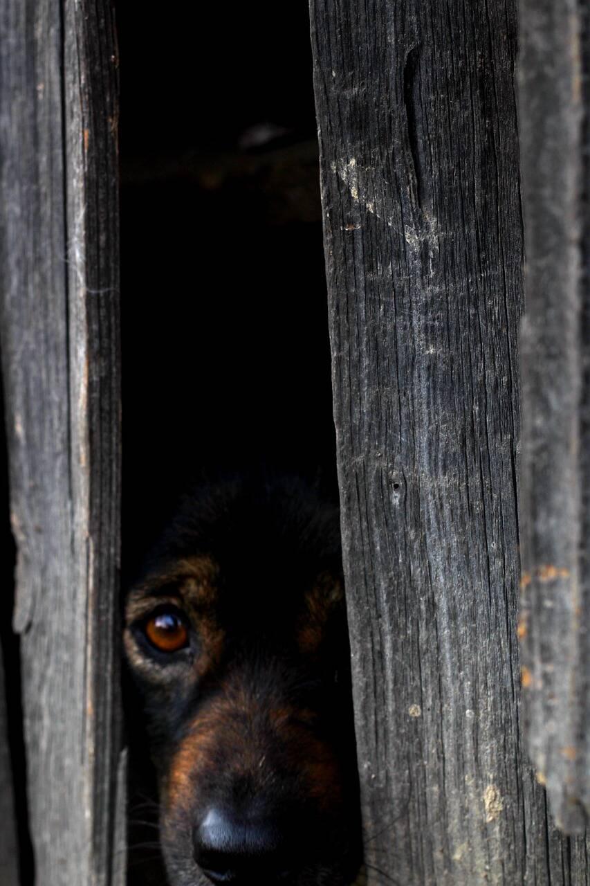 cão escondido - Foto Pixabay