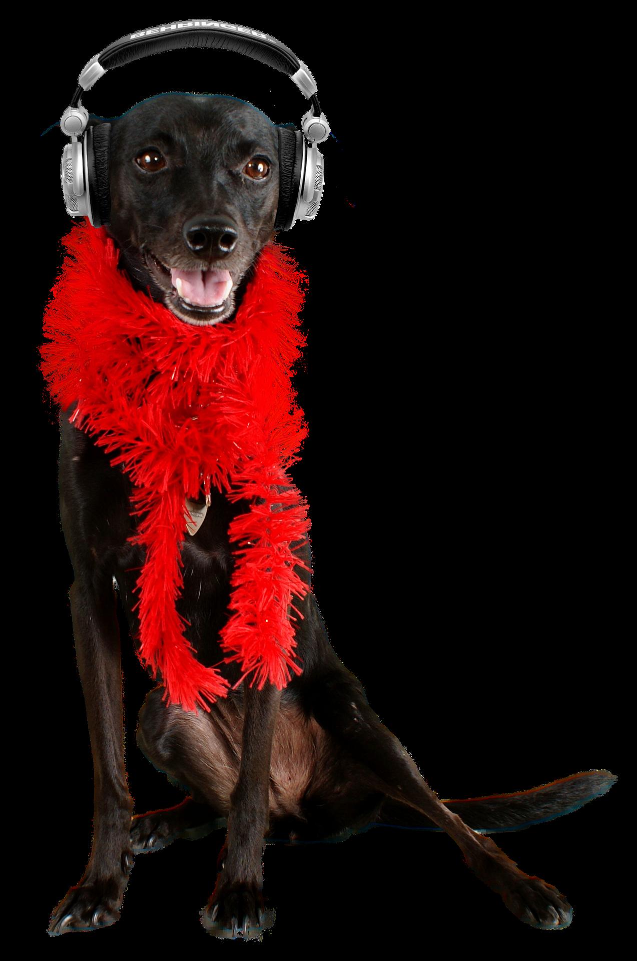 cão - fogos fone de ouvido - Foto Pixabay