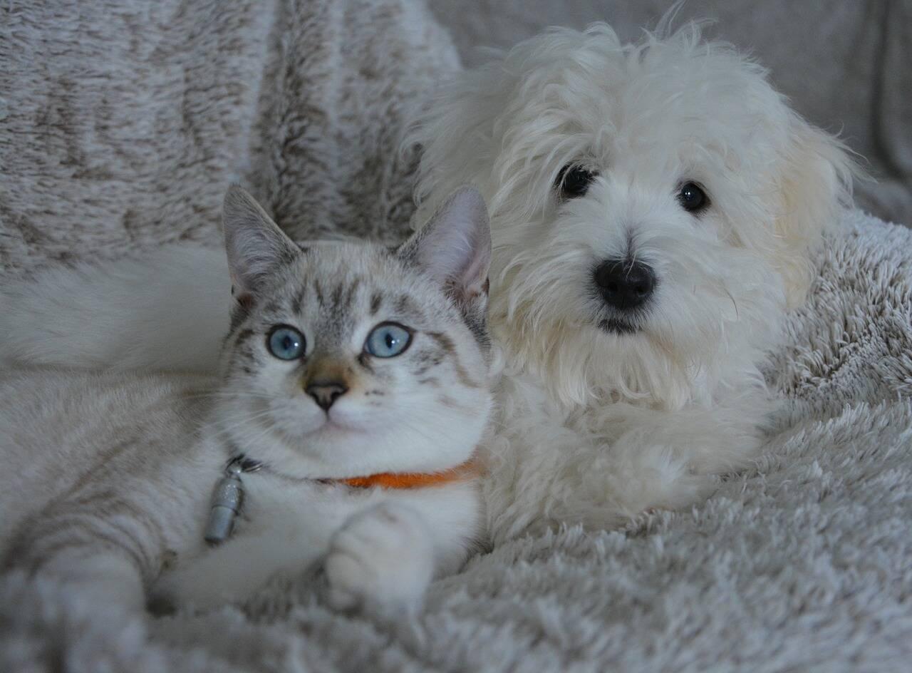 cão e gato - Foto Pixabay