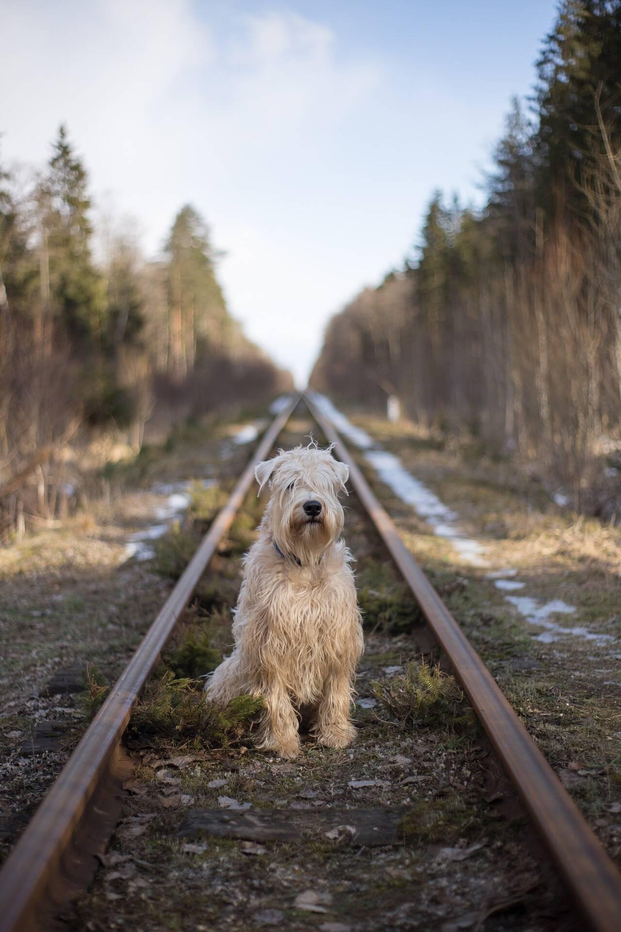 cão abandonado - Foto Pixabay