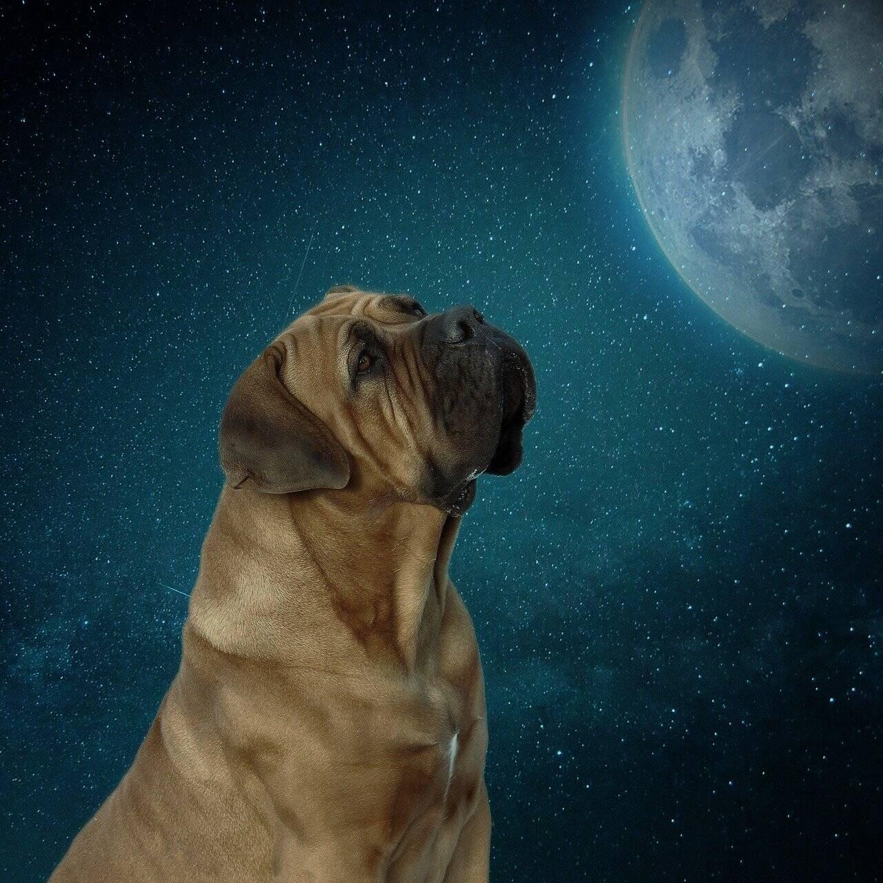 Cão na lua cheia - Foto Pixabay