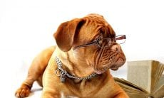 cachorro de óculos - Foto Pixabay