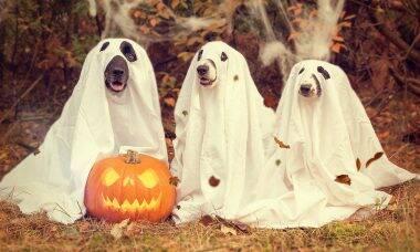 cães fantasmas - Foto Pixabay