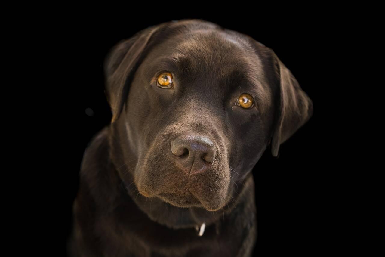 Cachorro olhar - Foto Pixabay