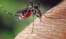 Mosquito Aedes aegypti - Foto Pixabay
