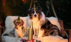 Cães festa Réveillon - Foto Pixabay