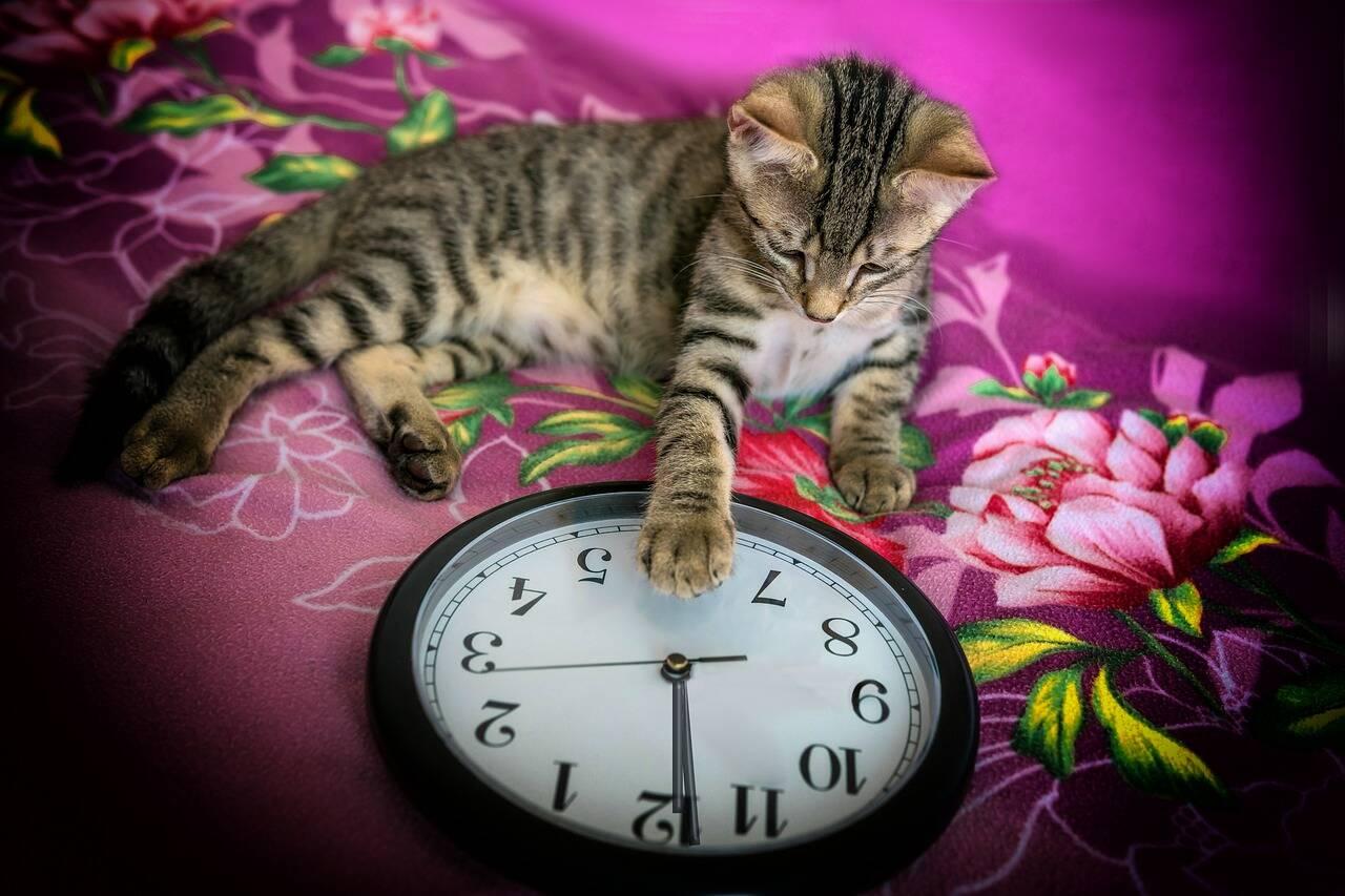 gato - fogos réveillon - Foto Pixabay