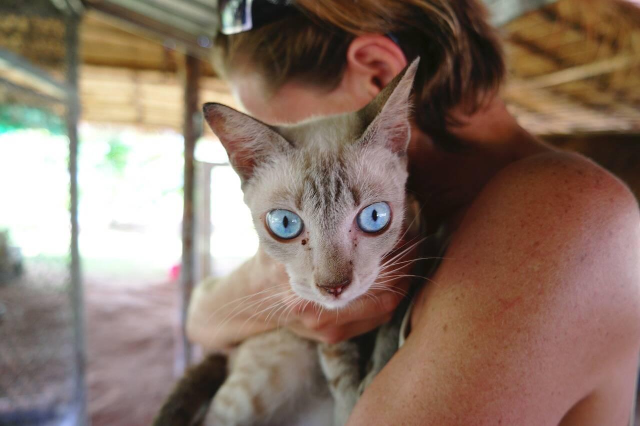 gato dona colo - Foto Pixabay