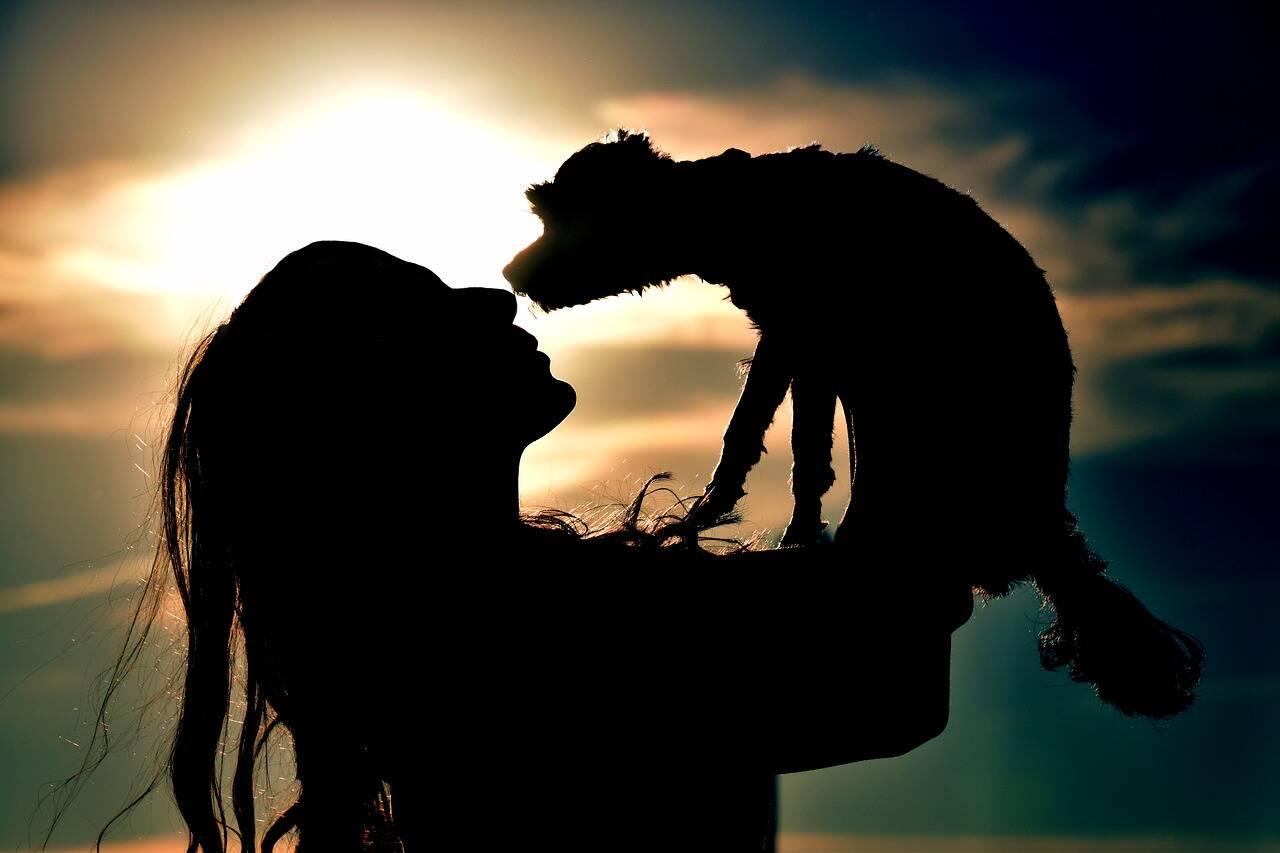 cachorro cão hálito - Foto Pixabay