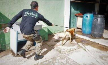 Cães, juntamente com a DOE, prestam apoio ao cumprimento de mandados de prisão em todo o DF. Foto- Lúcio Bernardo Jr : Agência Brasília
