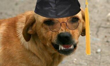 cão inteligente - Foto Pixabay