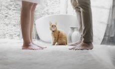Gato casal - Foto Pexels