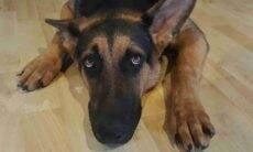 cachorro assustado com medo - Foto Pixabay
