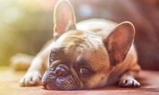 10 sinais de que seu cão quer um tempo sozinho