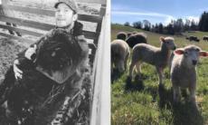 Chris Pratt e seu carneiro de estimação