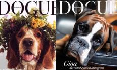 Dogue Challenge: cães viram capa de revista
