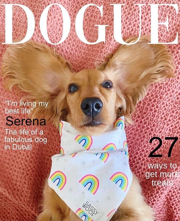 DogueChallenge: donos fazem montagens com cães em capa de revista