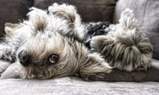 Saiba quando você deve se preocupar com a coceira do seu cão