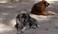 Número de animais abandonados aumenta durante a pandemia