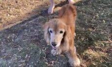 Vídeo: Cadela cega reconhece dono pelo cheiro e encanta a internet