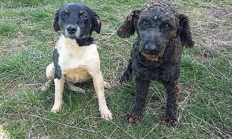 Casal já gastou mais de R$ 70 mil para encontrar cães desaparecidos na Nova Zelândia