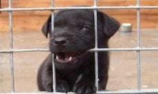 Deu vontade de adotar um cão? Responda às perguntas e veja se está preparado