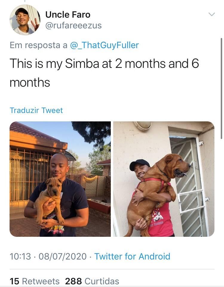 Antes e depois: donos divertem a internet com fotos de seus cães filhotes e adultos