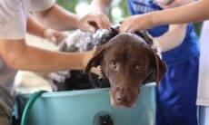 10 maiores erros que encurtam a vida do seu pet