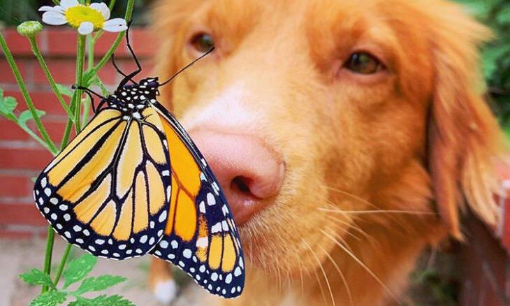 Conheça Milo, o cão amigo das borboletas