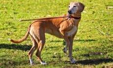 Como o seu cão sabe quando é hora da comida e do passeio? A ciência explica