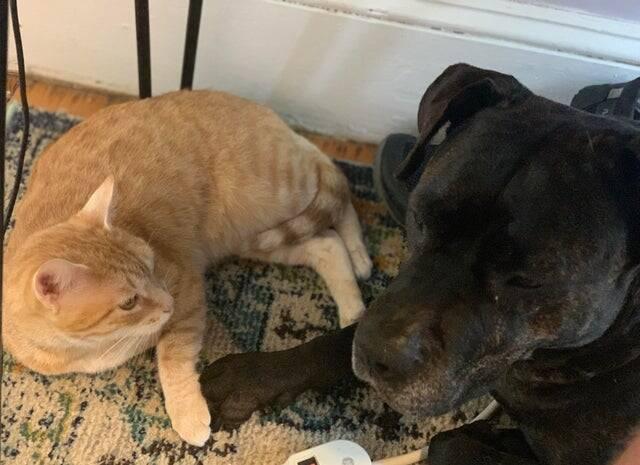 Cães e gatos podem ser melhores amigos