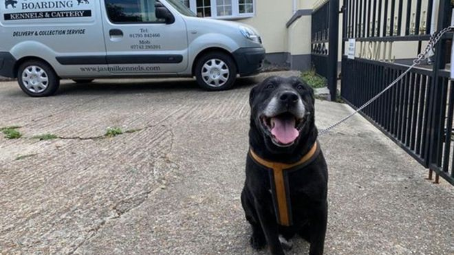 """Cão idoso abandonado por """"não ter aprendido a ser bom"""" ganha novo lar"""
