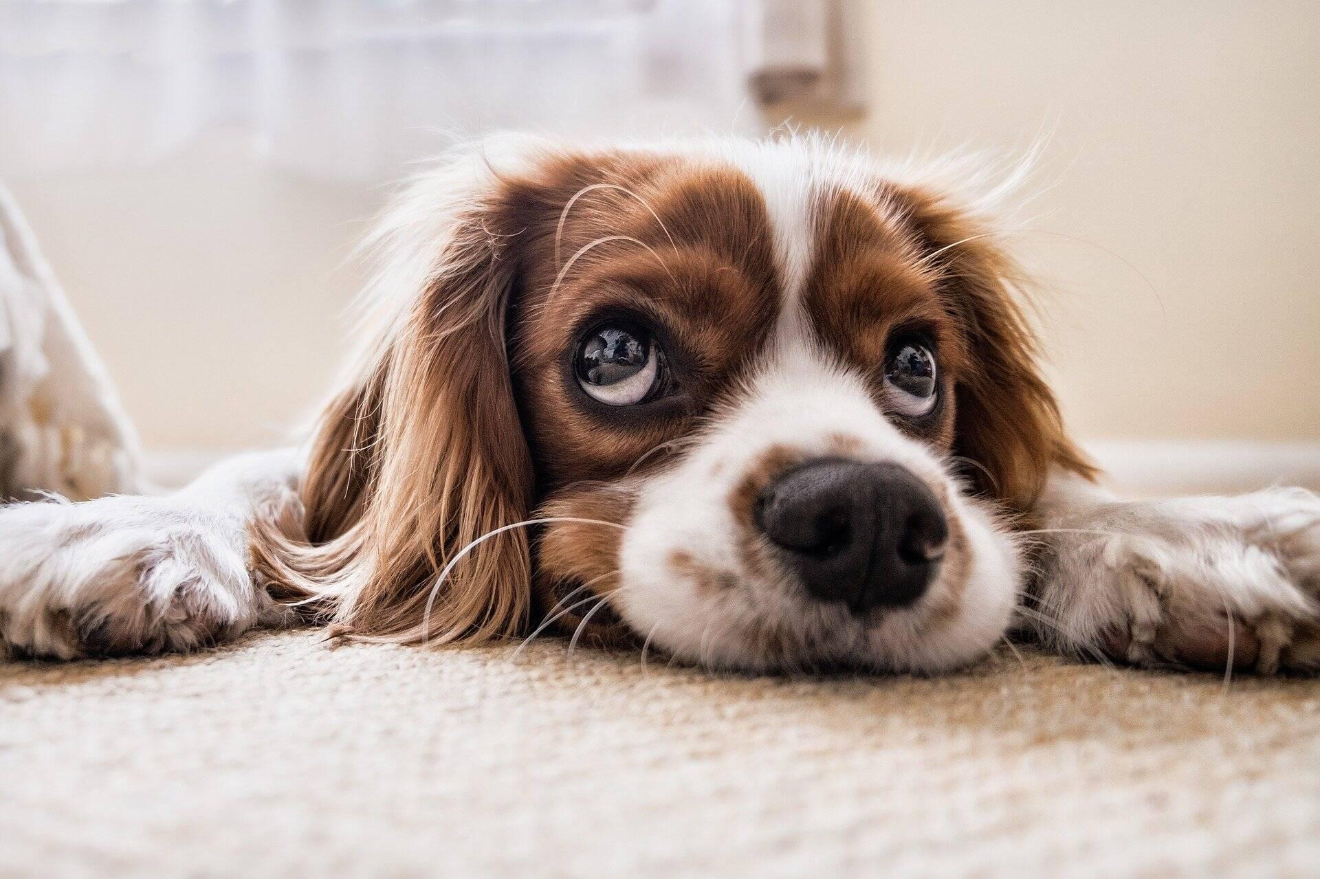 9 coisas que você não sabe sobre os cães, segundo a ciência