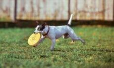 Com reabertura dos parques, veja os cuidados que você precisa ter com seu cão