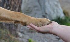 Saiba como acalmar um cão que tem medo de cortar as unhas