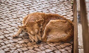 Radialista sugere envenenamento de cães de rua e gera revolta