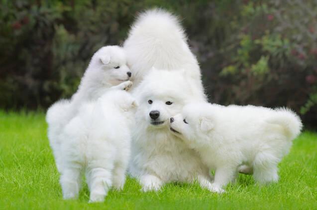Curte fotos de cães fofos? Então derreta-se com essa galeria