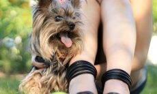 3 razões pelas quais o seu cão não desgruda de você