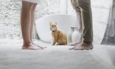 Novo aplicativo de relacionamento promete conectar amantes de gatos