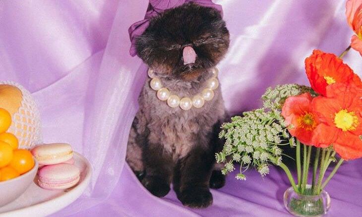 Conheça Muah'Dib, a gatinha mais fashionista da internet