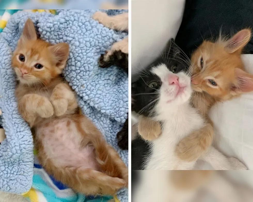 Gatinho com três patas mostra evolução graças a um amigo perfeito