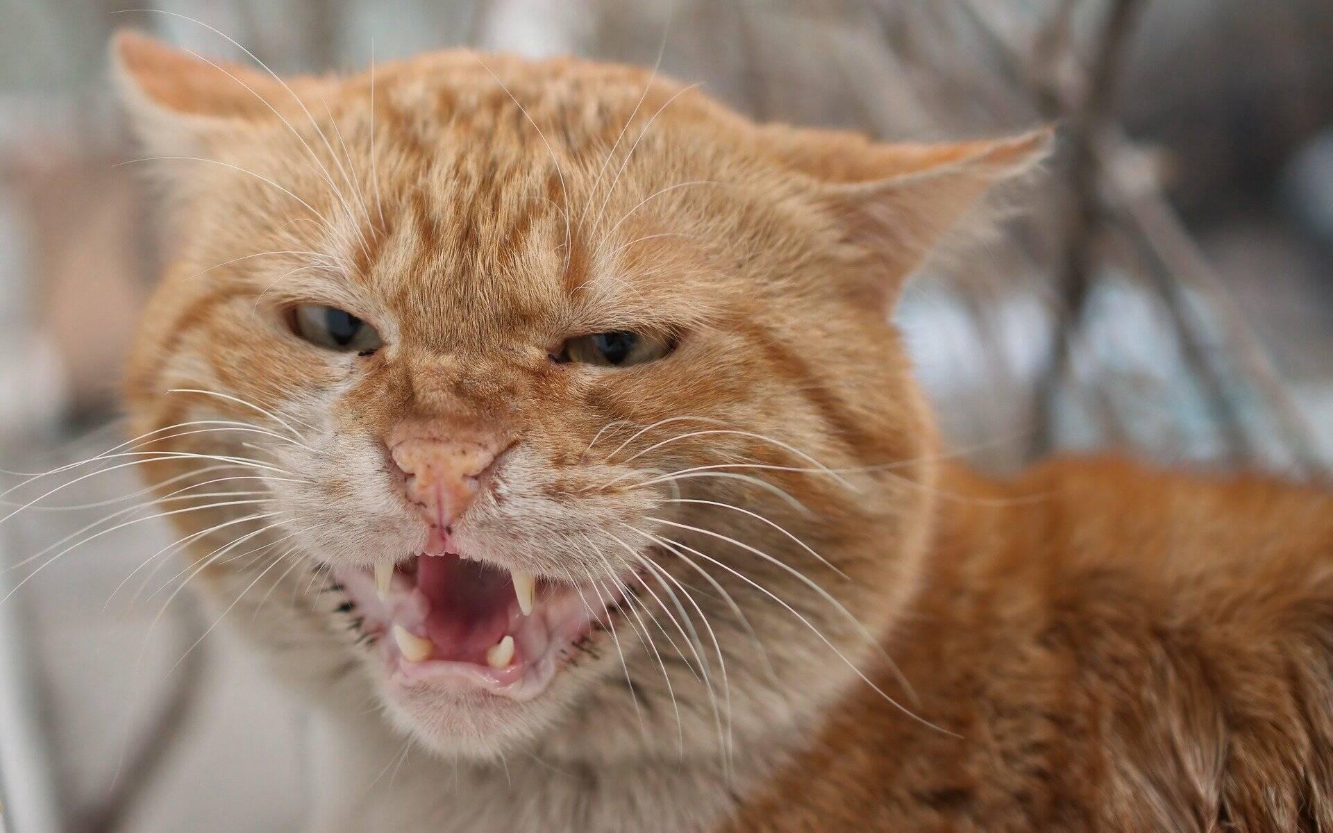 Mudanças na rotina podem deixar seu gato estressado e até doente