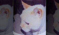Gato morto há 12 anos recebe registro para votar nas eleições dos EUA
