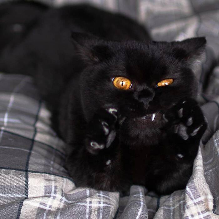 Murder Mittens: grupo reúne fotos assustadoras de gatos exibindo suas garras