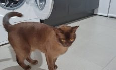 Gato sobrevive após ficar 12 minutos dentro de máquina de lavar ligada