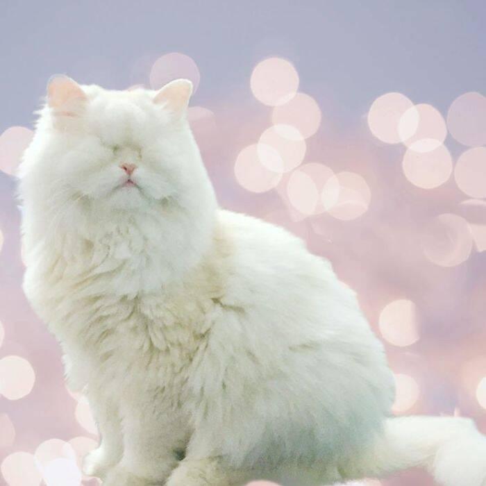 Cega em pet shop, gata persa é adotada e ganha segunda chance