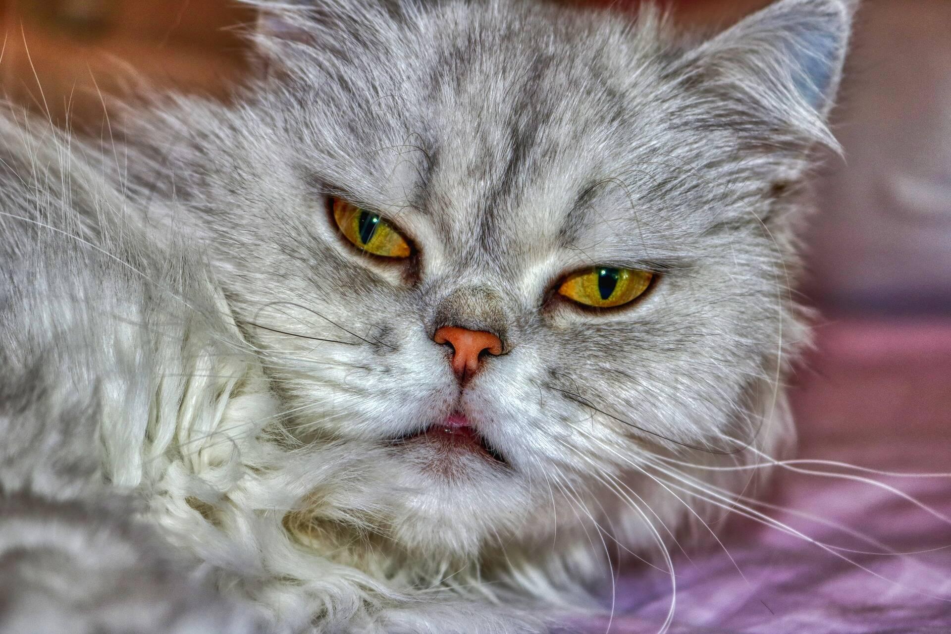 10 possíveis razões para o mau comportamento do seu gato
