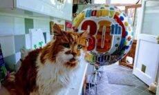 Morre aos 31 anos o gato mais velho do mundo
