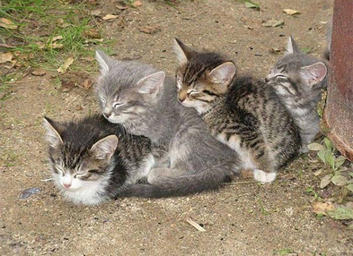 Gatos são flagrados dormindo juntos nas posições mais bizarras