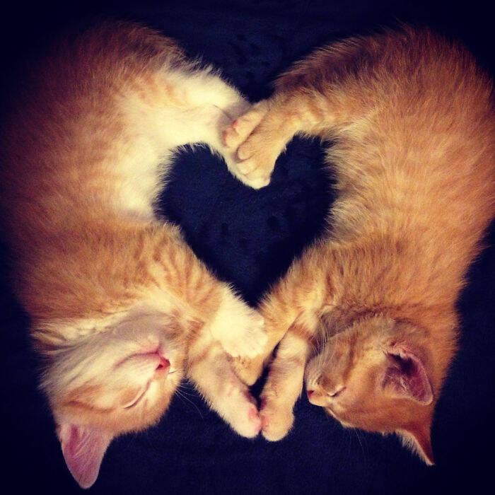 Gatos dormindo juntos